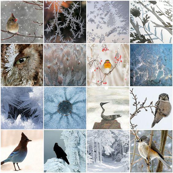 Birds in winter: