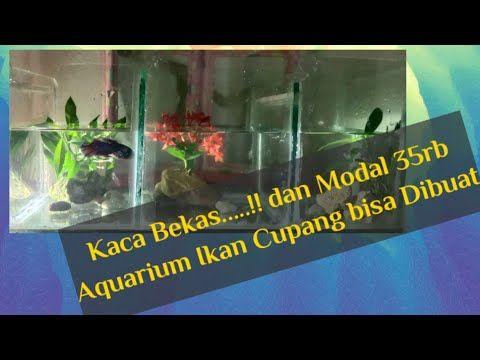 Cara Membuat Aquarium Ikan Cupang Youtube Di 2020 Aquarium Ikan Aquarium Ikan Cupang