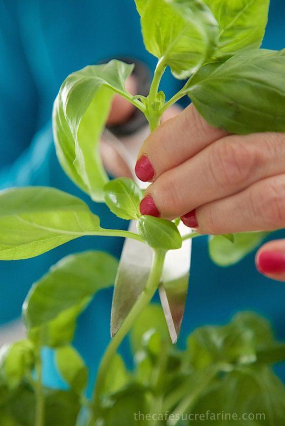 10 alimentos que você pode replantar – Tempero Alternativo