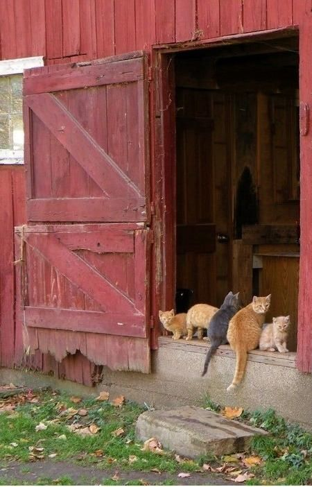 This reminds me of innumerable kitty scratches that were our rewards for trying to hold and pet the barn kitties!  You would think we would eventually learn and leave them alone...never did.