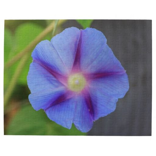 Purple Morning Glory Jigsaw Puzzle
