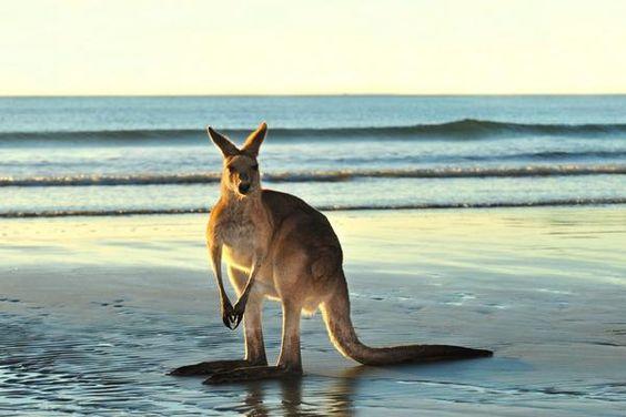 Australia DMC, Incentive travel Australia, event management Australia, professional conference organisers Australia, PCO Australia, MICE Australia