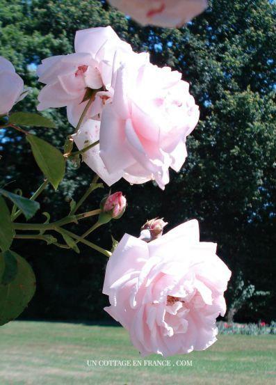Roseraie de Limoges
