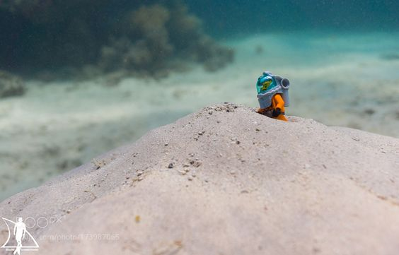 Underwater explorer by schwarzmeiermischa #nature #photooftheday #amazing #picoftheday #sea #underwater