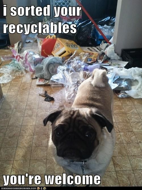 Funny You Re Welcome Meme : I sorted your recyclables you re welcome pug love