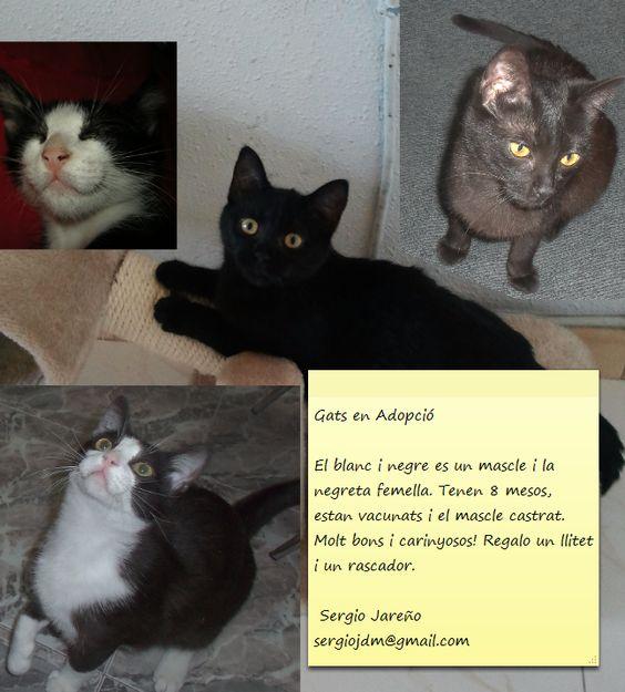 gats en adopció