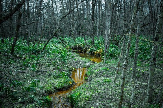 Yellow stream by Ryusuke Komori on 500px