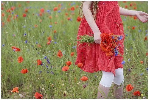 Poppy Field by loretoidas