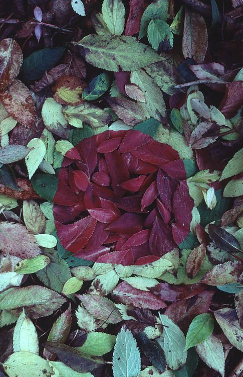 Andy Goldsworthy, Elder leaf patch, Helbeck, Cumbria, October 1983 (via Andy Goldsworthy Digital Catalogue)
