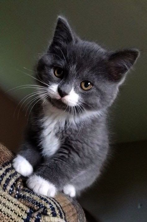 What I M Prettier Than Your Decorations Kittens Cutest Cute