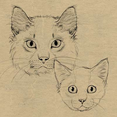 How to draw animals:Cats and their anatomy. Drawing fur. Links to drawing Big Cats and Dogs&Wolves: