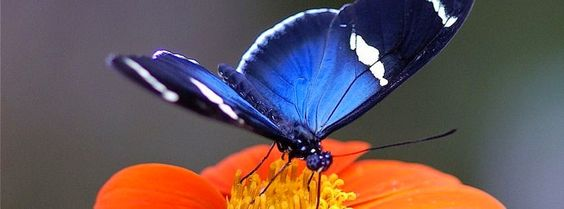 Magnifique couverture facebook papillon