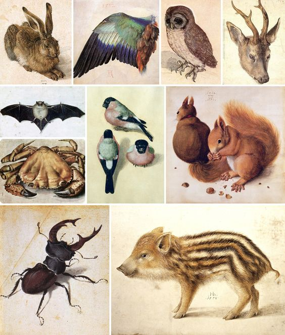 Biologia ed arte: il disegno naturalistico – DidatticarteBlog - Albrecht Dürer