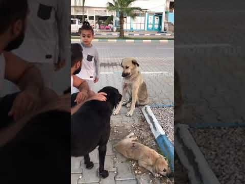 Father Dog Attacks Mother And Kills His Own Puppy Full Video Youtube In 2020 Dog Attack Puppies Dogs