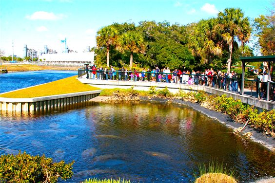 Manatee Park, Fort Myers, Florida - see the manatees up close