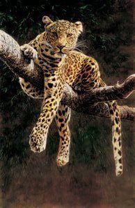 Alan Hunt | Hypnotic Leopard In Tree