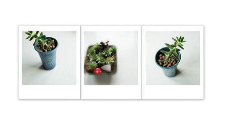 '3 Bilderserie 31 Zimmerpflanzen' von Mika Iwakiri