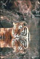 Cada um dos senhores deve reunir a coragem do leão,tigre....e jamais sucumbir as ameaças de ninguém.O tigre, leão ...não temem nenhum outro animal, nem tampouco seus filhotes temem. (Nitiren Daishonin) . Agora preste atenção:Embora não estejamos no reino animal, se você abaixar sua cabeça ,estando certo(a) ou errado(a),você se sentirá tão enfraquecido(a)...continua no blog