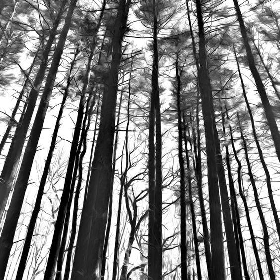 Nature Print, Nature Framed Art, Nature Art, 12x12 Frame, Digital ...