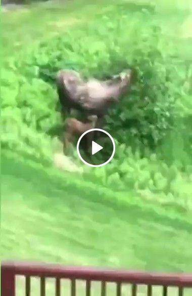 Cavalo briga com tronco.