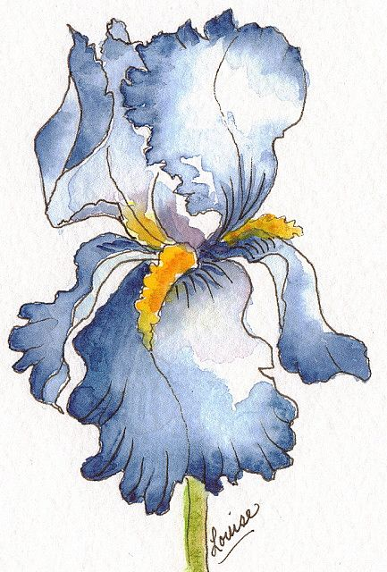 FOR THE LOVE OF THE IRIS  @ Louise Christian  I CAN NEVER PAINT ENOUGH IRIS'S  I LOVE THEM!!!    WATERCOLOR & INK: