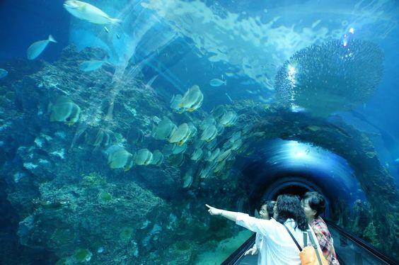 National Museum of Marine Biology and Aquarium - bảo tàng hải dương học