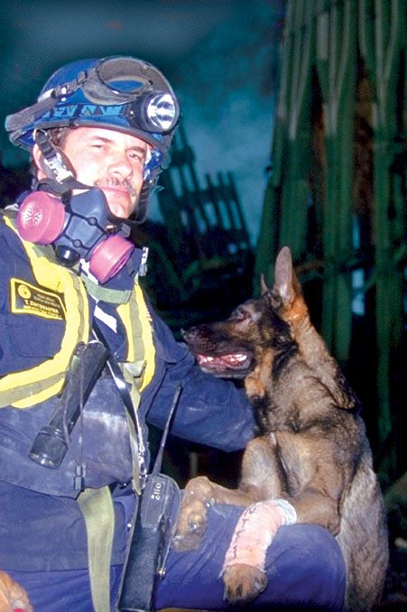 one of the dog heroes of 9/11: