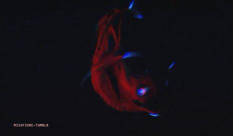 Vampire squid and Vampires on Pinterest