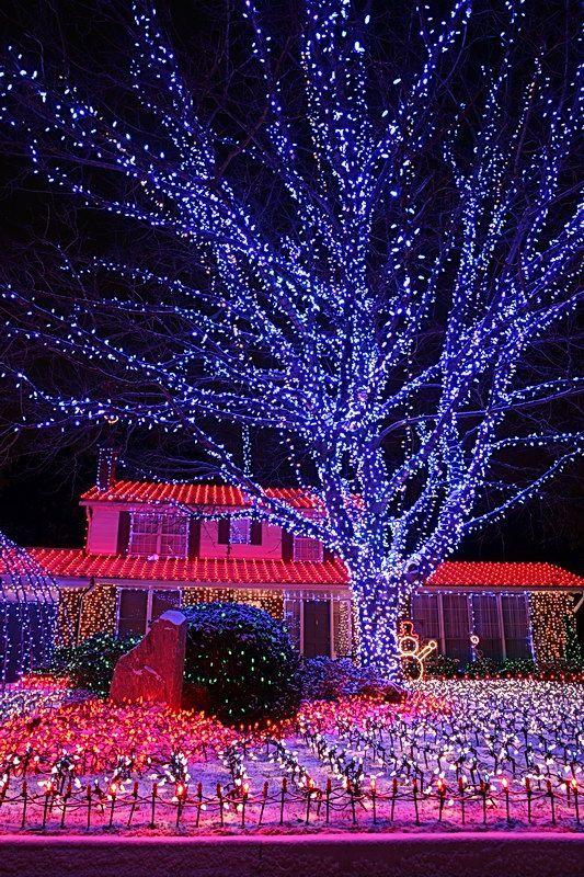 Home Done By Martin Andrew Lindsay In Ontario Canada More Than 70 000 Lights H Christmas Christmas Lights Tree 2020 Noel Balonlar Renkler