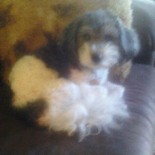 Relaxing No More Cages My Baby Brady Puppy Mills Dogs Puppies