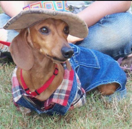 "So dang cute:  Charlie the Farmer says, ""Yeeeee-Hawwww!"""