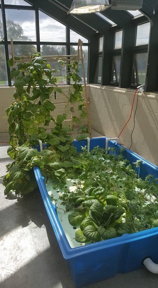 300 Gallon Aquaponic Grow Bed Aquaponics Aquaponics Fish