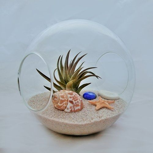 Air plants zero and the office on pinterest for Zero maintenance plants