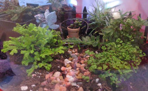 Through the fairy garden glass