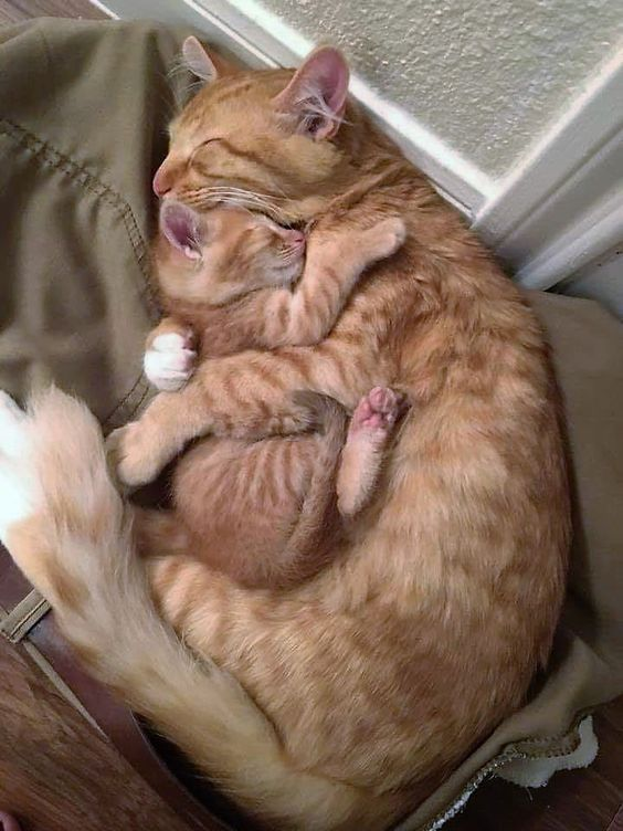 Happy Mother S Day Mother S Day This Year Falls On May 12th And It S A Great Time To Celebrate All Different Types Of Cat Hug Cute Baby Animals Cute Animals