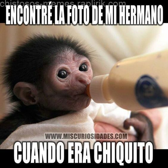 Best Funny Memes For Fami Chistoso Frases Chistosas Para Hermanos Memes Nuevos