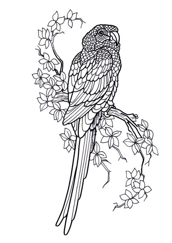 Dessin tr s r aliste d un perroquet sur une branche colorier coloriages - Dessins de perroquets ...