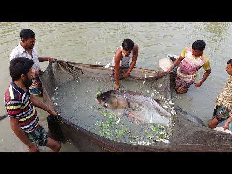 فيديو حقيقي ظهور حورية البحر لن تصدق شكلها حيرت العالم Youtube Fotos De Sirena Sirenas Verdaderas Sirenas H2o