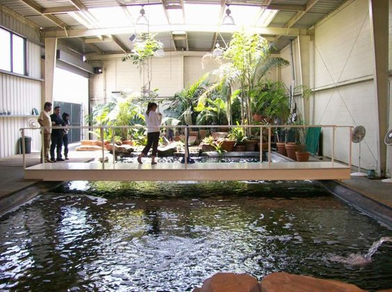 Pinterest the world s catalog of ideas for Indoor koi fish pond