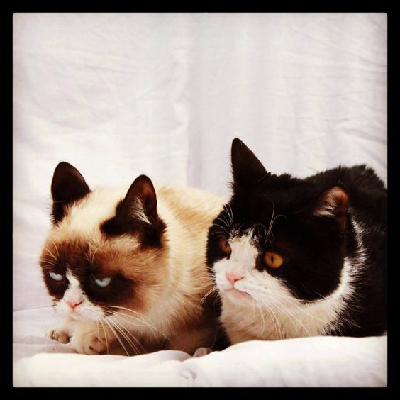 Tardar Sauce (Grumpy Cat) And Her Sibling