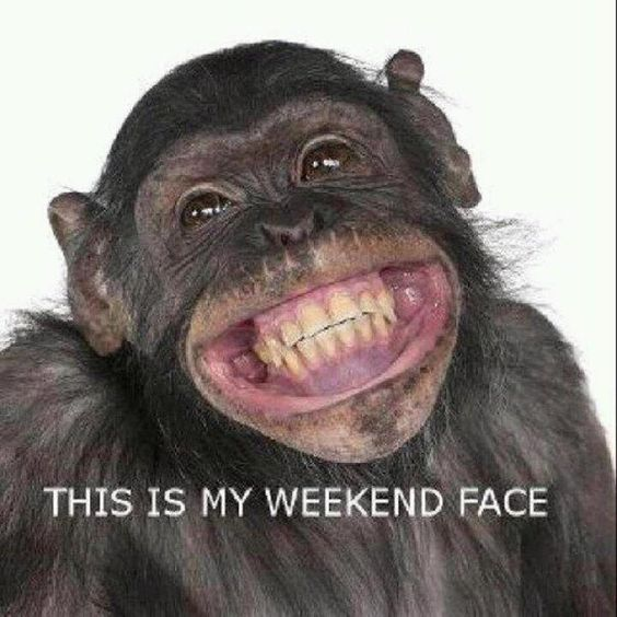 Anyone else ready for the weekend?? humor