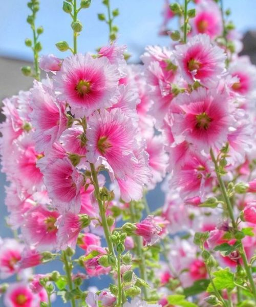 Beautiful Landscapes And Flowers Spring Garden Flowers Amazing Flowers Beautiful Flowers