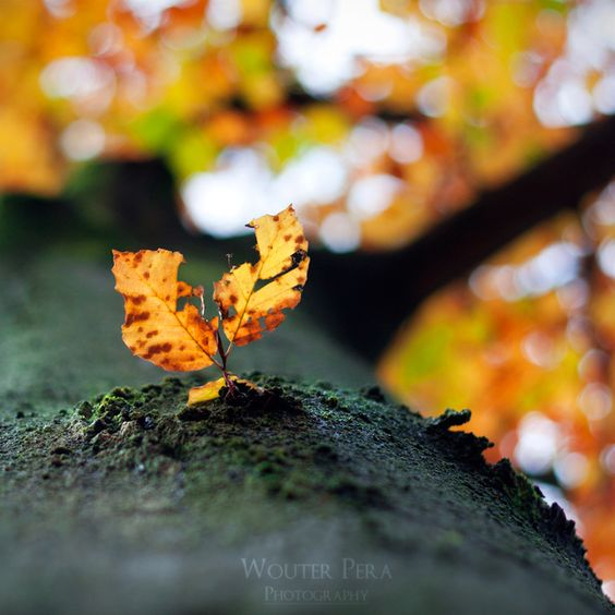 On the side of autumn by =WouterPera on deviantART