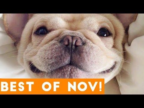 Most Watched Funny Animal Videos Talking Dog Talking Dog Video