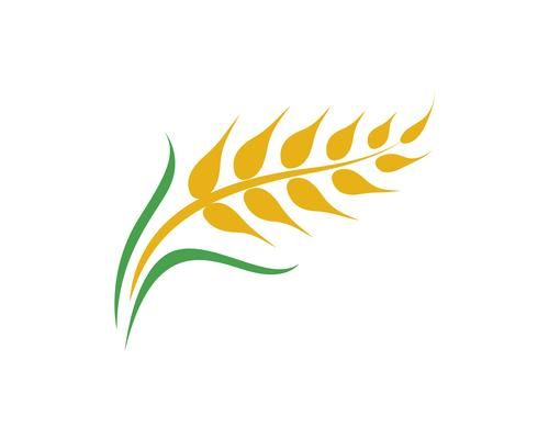 Agriculture Wheat Vector Wheat Vector Wheat Design Larkspur Tattoo