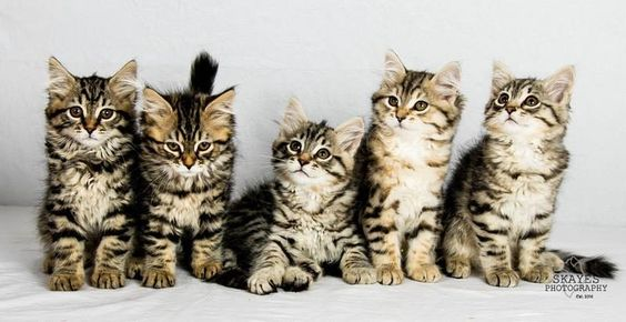20160625-kittens-shoot.JPG (800×412)