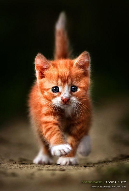 Trendy Top 10 Cute Cats Breeds Kittens Cutest Cute Cats Animals