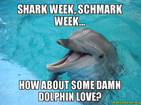 Funny Meme Upload : Dolphin memes makeameme org make meme upload image