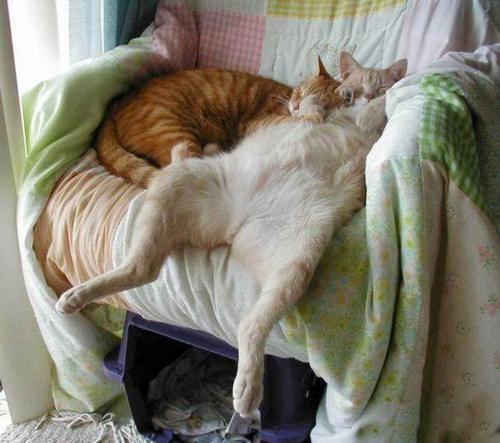 drunk on catnip! lol