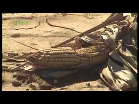 Global food supplies - YouTube